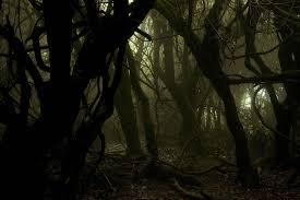 Resultado de imagen de bosques terrorificos