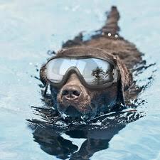 <b>Dog Sunglasses</b> & Googles for sale | eBay