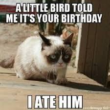 Cats: Grumpy Cat on Pinterest   Grumpy Cat, Grumpy Cat Meme and ... via Relatably.com