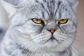 What Do Cats <b>Think</b> About Us? <b>You</b> May Be Surprised