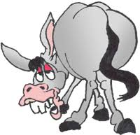 Image result for donkey's ass
