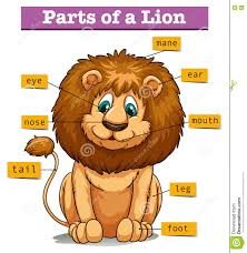 diagram showing  s of lion stock vector   image    diagram showing parts of lion
