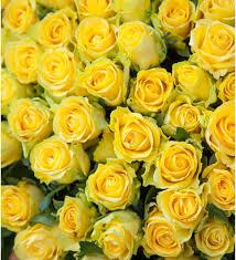 <b>Композиция из 501 или</b> 1001 желтой розы Золото, Москва
