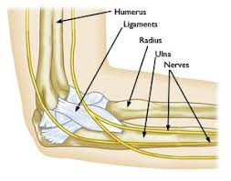 Throwing Injuries in the <b>Elbow</b> in Children - OrthoInfo - AAOS