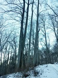 photo essay a walk in the winter woods conservancy even in the winter time you will see squirrels and hawks perched up in the trees or saplings young trees poking out through the snow