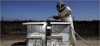 Αποτέλεσμα εικόνας για τροφοδοσια μελισσων