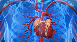 Natural remedial measures for heart conditions