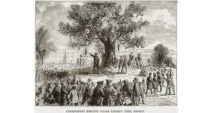 the story behind a forgotten symbol of the american revolution    the liberty tree in colonial era boston  public