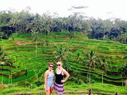 Hasil gambar untuk tegalalang rice terrace