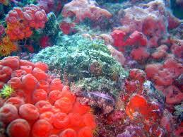 أكبر تجميع لأجمل صور من اعماق البحار (سبحان الله الخالق العظيم) Images?q=tbn:ANd9GcQjJ-qmFmM8LjJ6jXRBiMrgf6YNSxcpmIy6DzYv6lWVKtCGidMClw