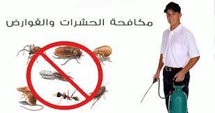 قمة الامتياز لمكافحة الحشرات بالجبيل