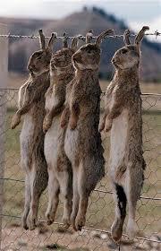 The Rabbits Have Been At It Again ... Images?q=tbn:ANd9GcQjhPnAQBbERogFU2g6qjI9T1XqAkKrl22VTLZX46eobT7IzwW33A