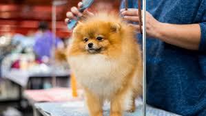 <b>Dogs</b> 101: Brushing Your <b>Dog</b> - Dogtime