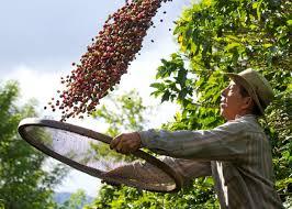 Resultado de imagem para dia do cafeicultor