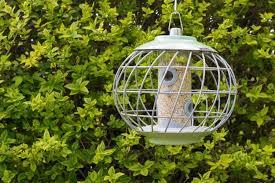 The 50 Best Squirrel-Proof <b>Wild Bird</b> Feeders of 2019 - Pet Life Today