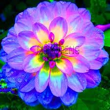 Online Shop New Fresh Plantas <b>20PCS</b> Rare Bonsai <b>Dahlia</b> Flores ...