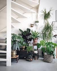 Жаркие <b>пальмы</b> в интерьере: простые секреты выращивания ...