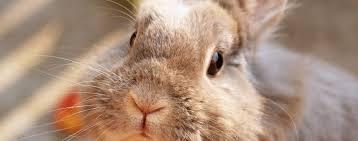International Rabbit Day is September 22 - Hartz