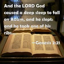 Image result for Genesis 2:21