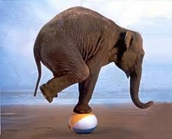 Image of elephant balancing on a ball