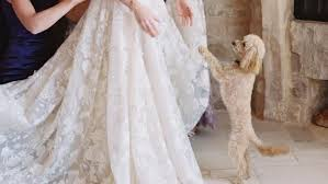 61 Too-Cute Ways to Include Your <b>Pet</b> in Your <b>Wedding</b>
