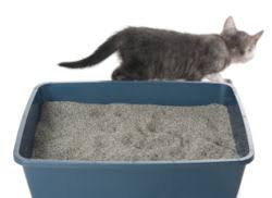 keep the litterbox clean for kitty cat litter box
