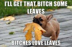 French Bulldog Memes on Pinterest | Leaves, Dogs and So Funny via Relatably.com