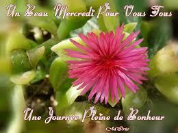 """Résultat de recherche d'images pour """"mercredi fleur"""""""
