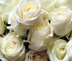 صور زهور رائعة images?q=tbn:ANd9GcQ