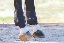 horses in loma linda california professionals choice pro performance pro mesh show jump boot rear hook loop
