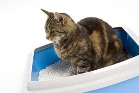кошачьего туалета кузя