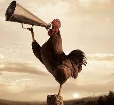 「雞叫」的圖片搜尋結果
