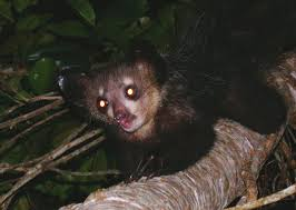 Selva de Madagascar Images?q=tbn:ANd9GcQl2hqzWh_kj9rm788fmbXXGnrfyya_a28FQcc19Kp6eg0KH0qL
