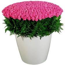 <b>Композиция из 501</b> розовой розы «Аква» купить в Москве ...