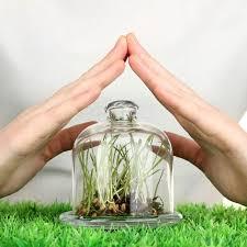 <b>Средства защиты растений</b>: виды и особенности (СЗР): виды и ...