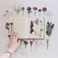 гербарий: лучшие изображения (39) | Цветы, Ботанические ...