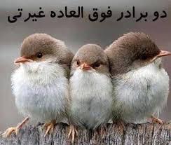 Image result for عکس خنده دار