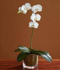 day orchid decor: single stem white orchid  single stem white orchid