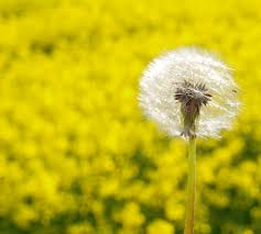 Alergia coraz bardziej dokuczliwa