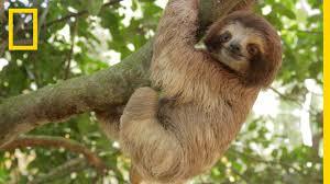 <b>Rainforests</b> 101   National Geographic - YouTube