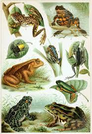 <b>Frog</b> - Wikipedia