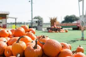 Pumpkin Patch — Old Time <b>Christmas Tree</b> Farm