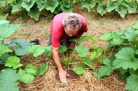Image result for soil conservation methods