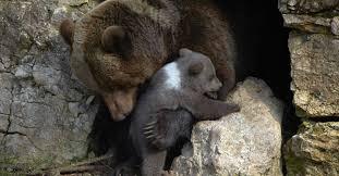 Como ursos ! Ame a seu irmão !