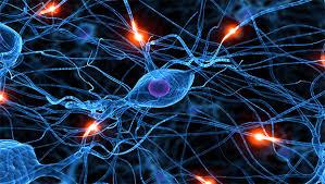 Resultado de imagen para sistema nerviosos