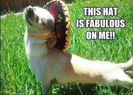 Image result for funny hats on pets