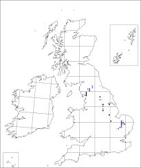 Carex ericetorum | Online Atlas of the British and Irish Flora