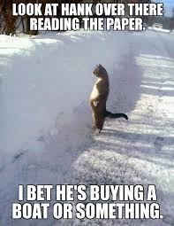 Envious Cat - WeKnowMemes Generator via Relatably.com