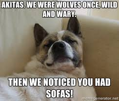 Akitas. We were wolves once, wild and wary. Then we noticed you ... via Relatably.com