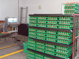 <b>Egg Pallets</b> - Virtual Farm Tour